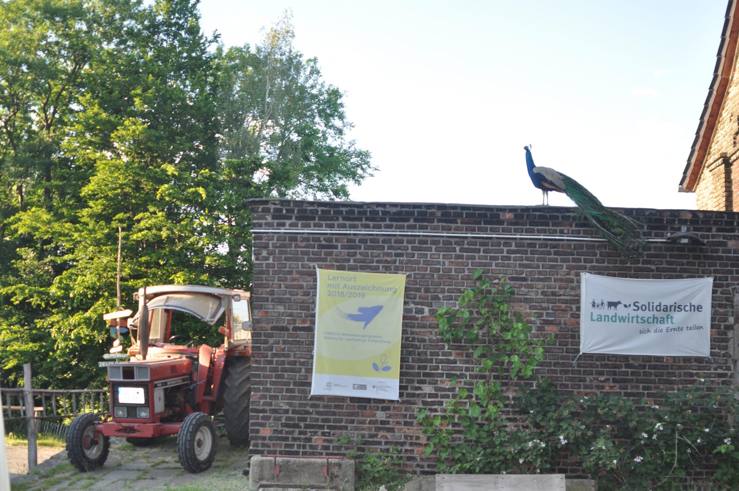 Einblick in den Lernbauenhof